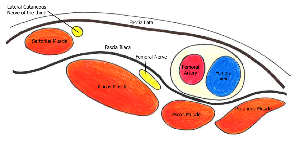 Femoral Nerve Block Article   European Society for Paediatric ...